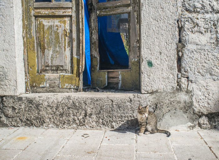 Tabby cat sitting on footpath against doorway of old building
