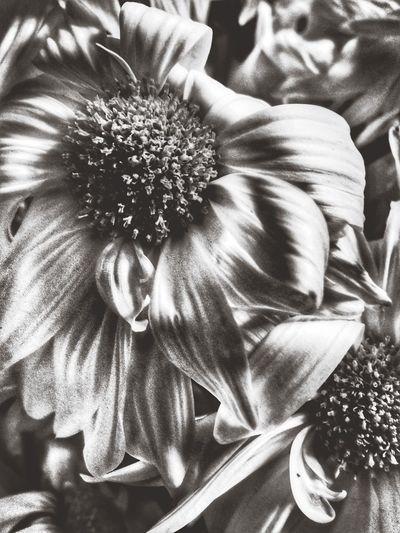 It's all a matter of time.... All_shots EyeEm EyeEm Gallery Blackandwhite Nothing But The G Thing Neverfaraway 831!!! 831 Flowers Flowerporn http://youtu.be/IiHhTdg8qrc