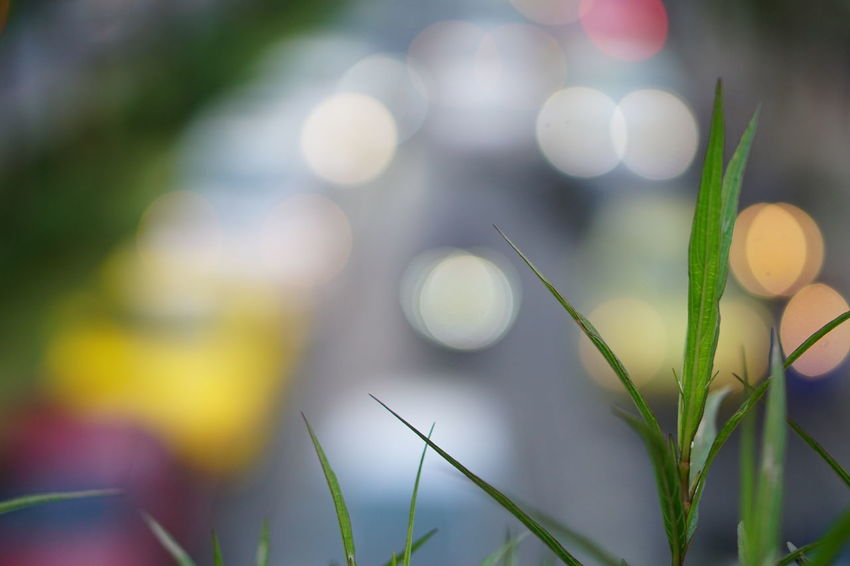 Close-up Plant Outdoors Nature Day No People Growth Defocused Flower Beauty In Nature Freshness Grass