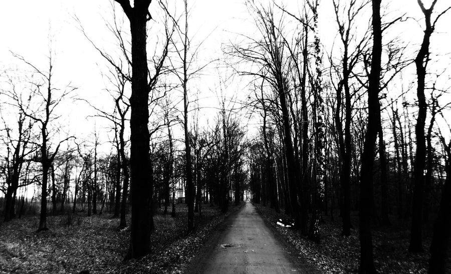 Concentrationcamp Auschwitz Birkenau Auschwitz  Bare Tree Birkenau Day Diminishing Perspective Empty Road Growth Long Narrow Nature Non-urban Scene Outdoors Pathway Road Scenics Solitude The Way Forward Tranquil Scene Tranquility Transportation Tree Tree Trunk Treelined Vanishing Point WoodLand