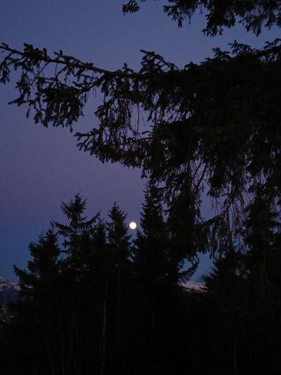 Norway Evening Moonlight Fulmoon Mountain Naturelovers Trees And Sky Westcoastbestcoast