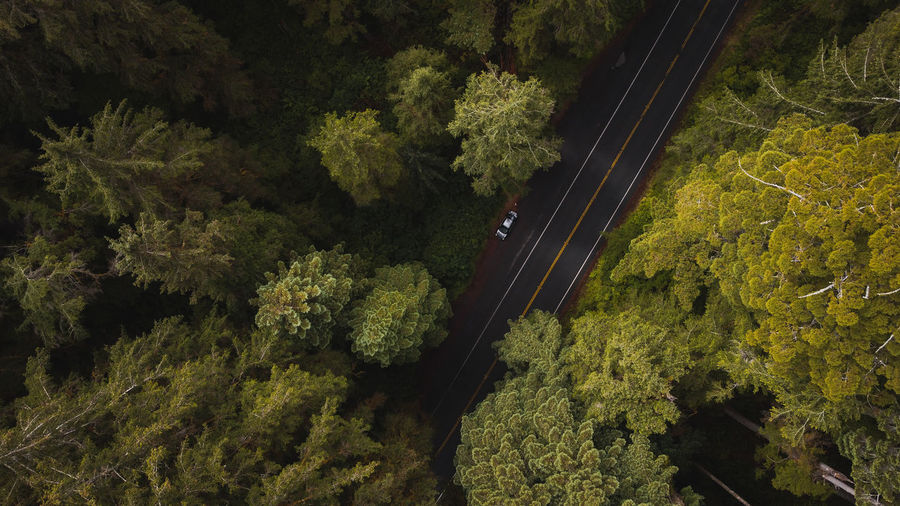 High angle view of car on road amidst giant trees in redwood forest national park