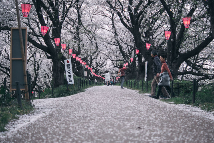 Adult Beauty In Nature Blossom Cherry Blossom Cherry Tree Day Diminishing Perspective Direction Flower Flowering Plant Full Length Growth Nature Outdoors Park Park - Man Made Space Plant Road Springtime The Way Forward Transportation Tree Treelined