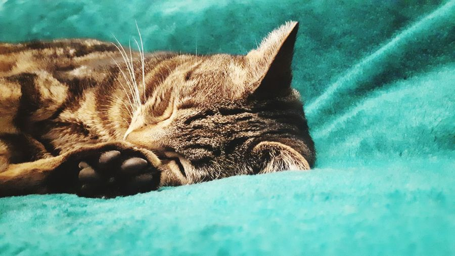 Relaxation Swimming Close-up Cat Stray Animal Domestic Animals Pets Ginger Cat Napping Sleeping Whisker Turquoise Colored Tabby Cat Pet Bed Kitten