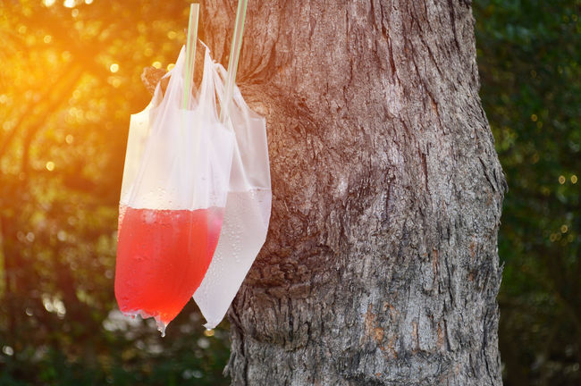 strawberry juice and soda in plastic bags are hanging on tree trunk in park with green bokeh background,concept is lover who different but perfect Garden, Fruit Juice Day Focus On Foreground Nature No People Outdoors Red Tree Tree Trunk Summer Soda Tropical Fruit Juicer Romantic Couple Sweet Moments Drink Drinking Fresh Freshness Lover Vocation Beverage Holiday Thirsty  Trees Syrup
