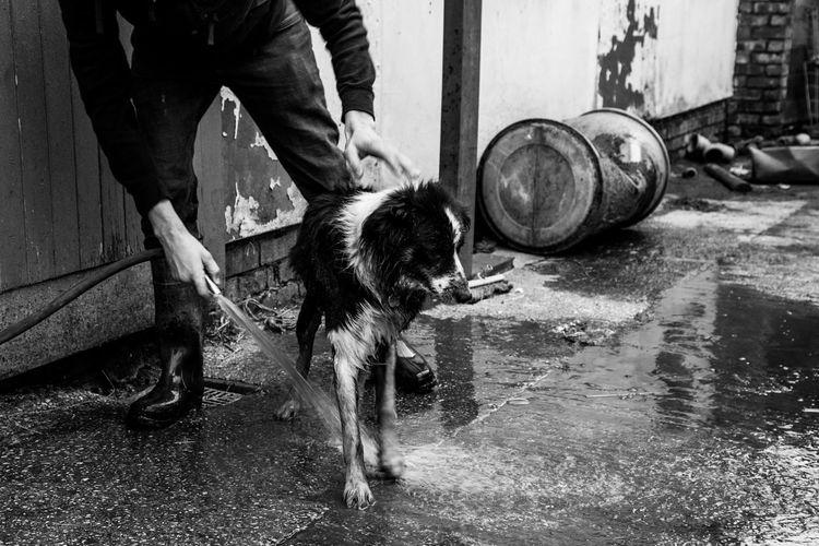 Man Spraying Water On Dog At Field