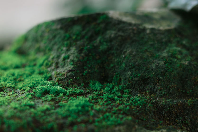 great moss in Indonesia 2019 Moss Moss & Lichen Mossy Mossy Tree Mossporn Moss Rock Green Color Selective Focus Close-up Solid Rock - Object Rock Focus On Foreground Plant Nature Geology Rough Extreme Close-up Plant ASIA INDONESIA Indonesian Indonesian Photography Textured  Day