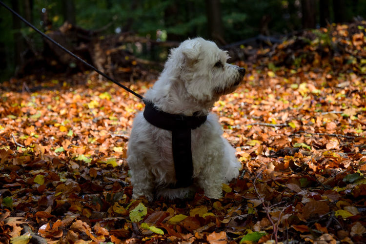 Dog standing on ground during autumn