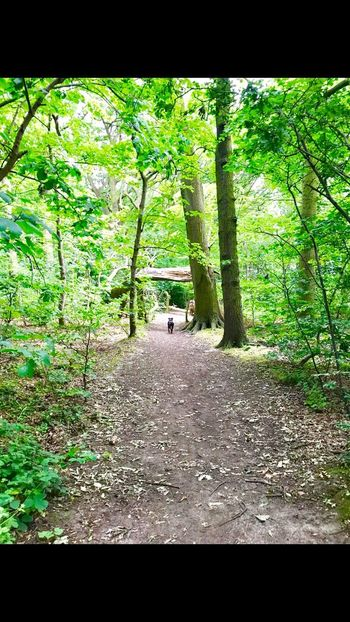 Arrowe Park Dogwalk Wirral Staffie Trees Stroll Through Nature