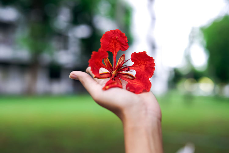 Cropped hand holding red flowering plant