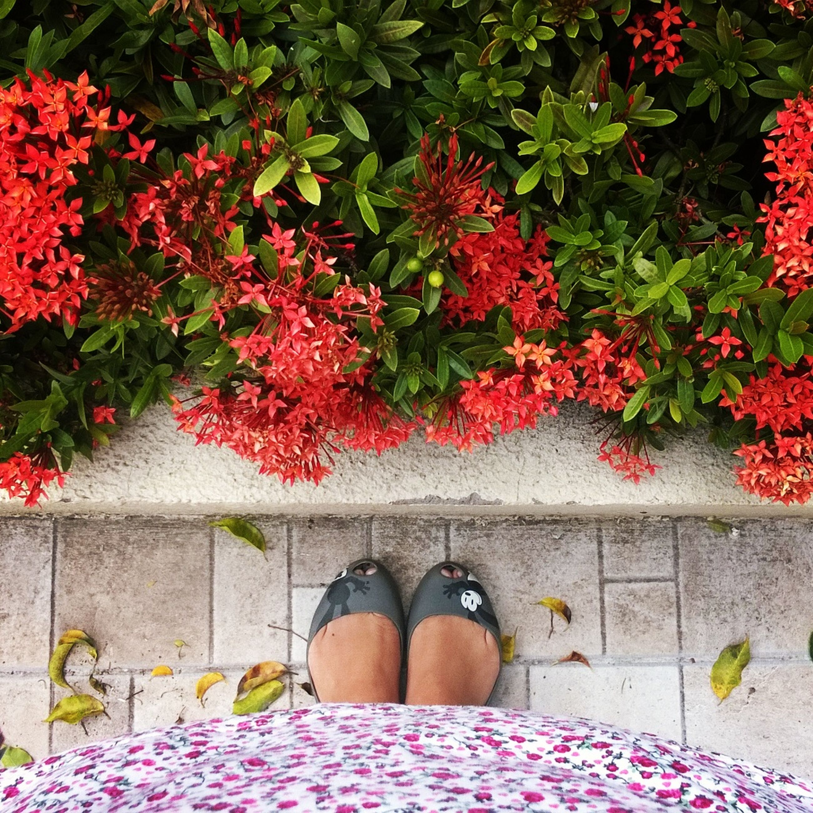 flower, red, plant, low section, growth, freshness, pink color, potted plant, standing, nature, fragility, person, leaf, beauty in nature, high angle view, outdoors, shoe, day