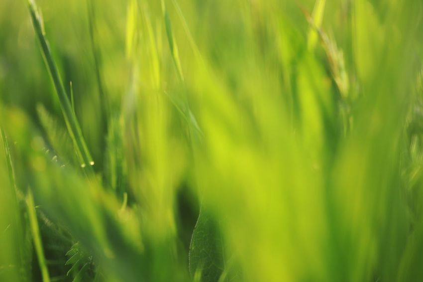 Green green grass of home Background Plant Green Color Growth Beauty In Nature Nature Day Selective Focus Land No People Full Frame Freshness Backgrounds Green Tranquility Fragility Grass Vulnerability  Outdoors Field Close-up