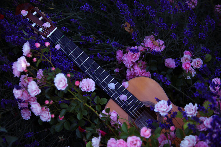 Directly above shot of acoustic guitar amidst flowers blooming on field
