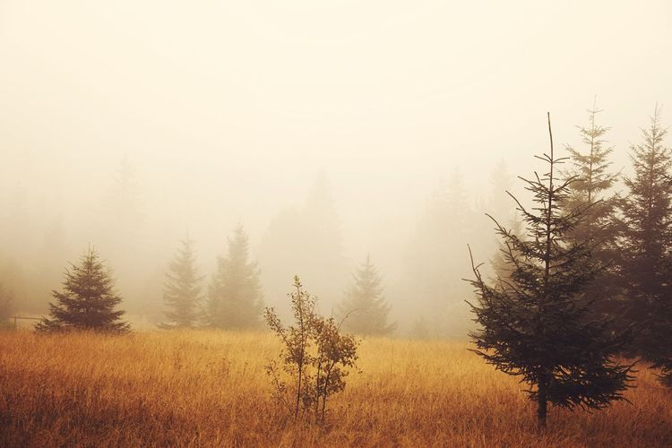 Trees and plants on field in foggy weather