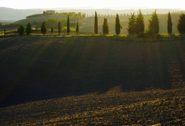Cipreses Cipressi Italy Landscape Light Light And Shadow Tuscany Tuscany Countryside Valdorcia Outdoors Rural Scene Getting Away From It All Sunlight, Shades And Shadows Tuscany Italy Countryside Pienza