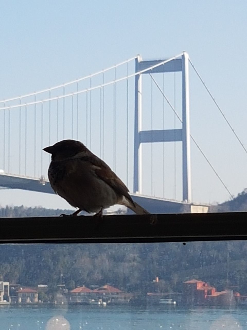 bird, animal themes, one animal, animals in the wild, railing, day, no people, animal wildlife, bridge - man made structure, outdoors, perching, clear sky, suspension bridge, nature, water, sea, architecture, sky, close-up