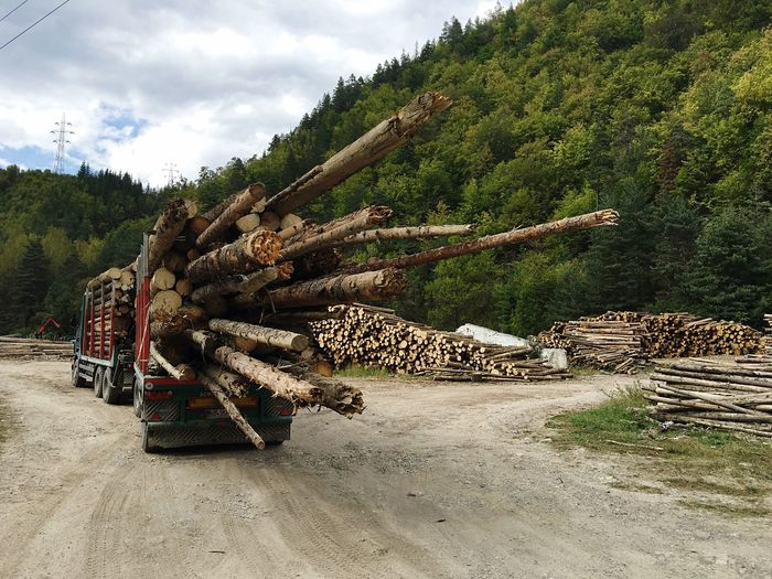 Romania Wood - Material Wood Transportation Transport Large Group Of Objects Abundance Repetition Forestry Industry Industrial Man Made Object In A Row Stack Truck Tree Trunk Ice Age Rack Country Road Long Timber No People Sack Outdoors Tree Material