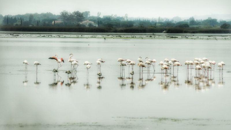 Pink Floyd. Wildlife Sky, Lake. Nature Bird