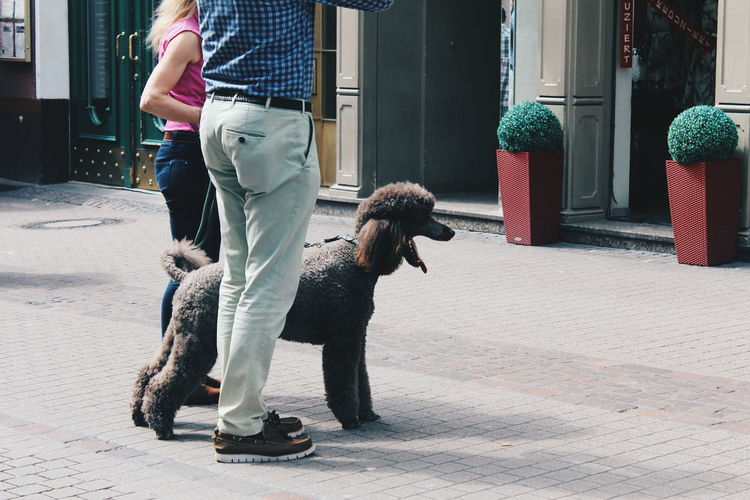 Low section of people standing by poodle on footpath in city