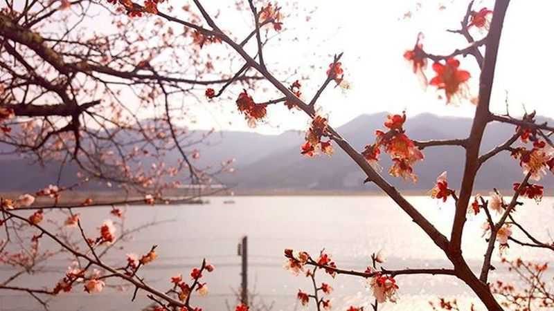 부산 Busan 바다 일상 데일리 감성 감성사진 사진 여행 일상공유 맞팔 Sotong Spring Camera 미러리스카메라 Follow Followme Photo Travel Daily Southkorea