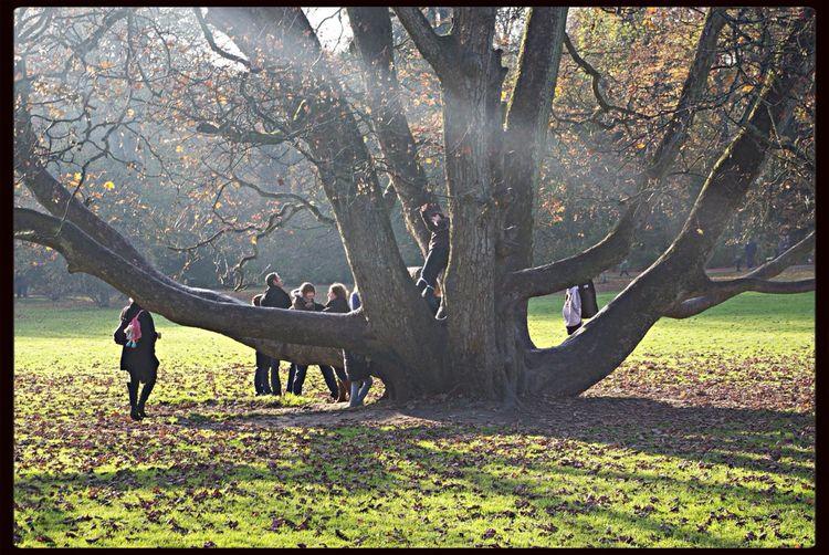 Tree Shadows &