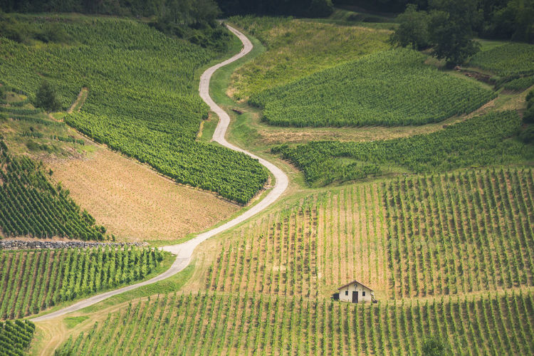 High angle view of vineyard field
