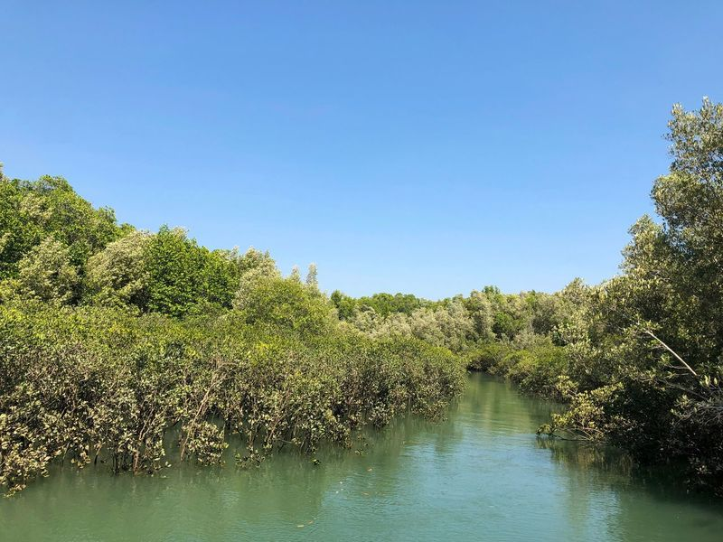 Mangrove in Darwin Harbour, Northern Territory, Australia. Fragile Ecosystem Mangrove Halophytes Rhizophora Rhizophoraceae Sky Water Plant Tree Growth Copy Space Nature Tranquility Clear Sky Beauty In Nature Scenics - Nature No People Green Color Blue Tranquil Scene My Best Travel Photo