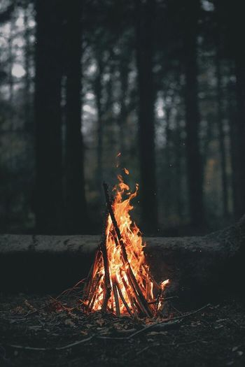 Fire Burning Flame Fire - Natural Phenomenon Tree Forest Heat - Temperature Wood - Material Wood Bonfire Firewood Camping Outdoors WoodLand Focus On Foreground Land Nature Log Plant No People
