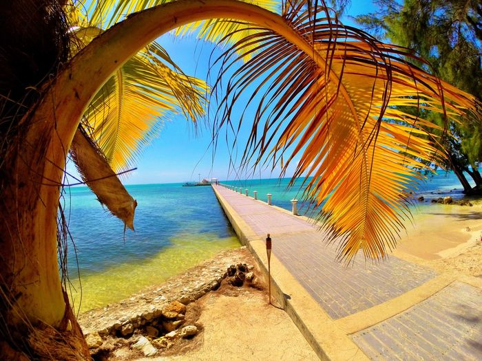 Tropical Sunset Clear Waters Island Sunset Tropical Beauty Tropical Beach Tropical Island Tropical Paradise Sevenmilebeach Bahamas Island In Bahamas Caymanwaves Cayman Islands Cayman Palmtreeframe Palmfronds Tiki Endlesspier
