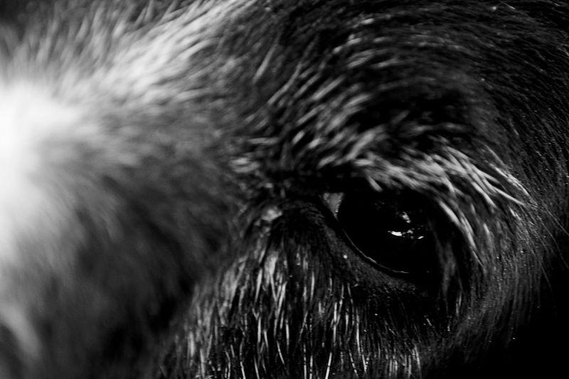 dog eye Dogs Animal Animal Body Part Animal Head  Animal Themes Close-up Day Dog Dog Eye Domestic Animals Eye Mammal Nature No People One Animal Outdoors Pets
