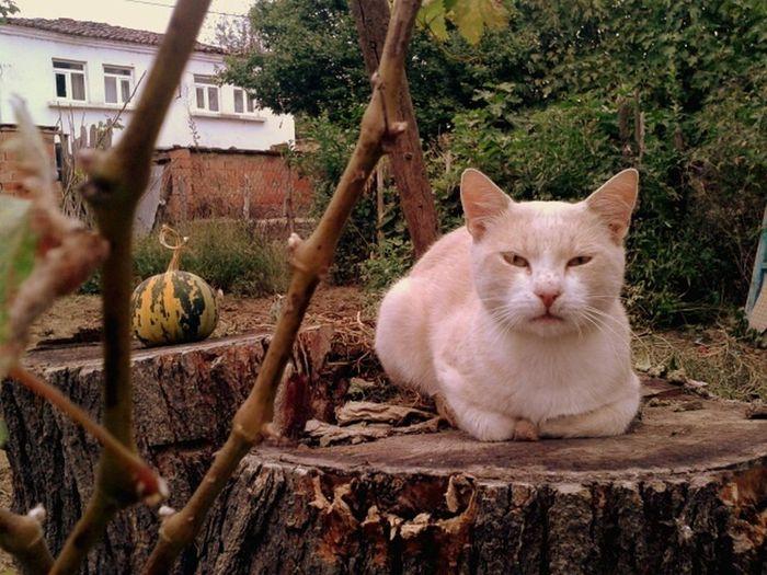 Cat Seriousface Angry Furious