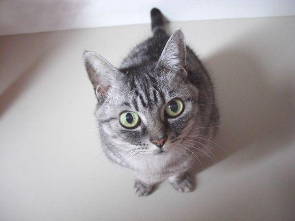 et alors...? My Cat♥ Pet Ma Fille Cute ねこ Love かわいい!! Pet Portraits