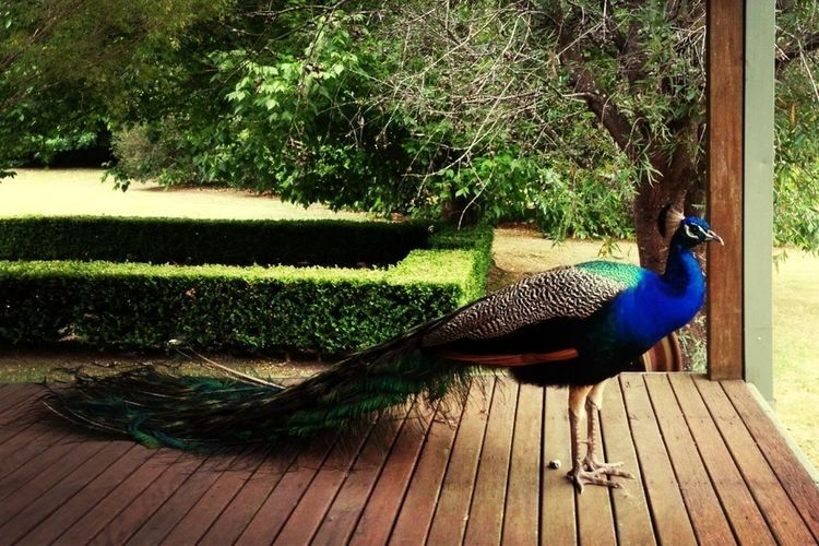 Just Arrived And Already Made A Friend Fa Lyfe! Yolo Little Peacock! Yolo!