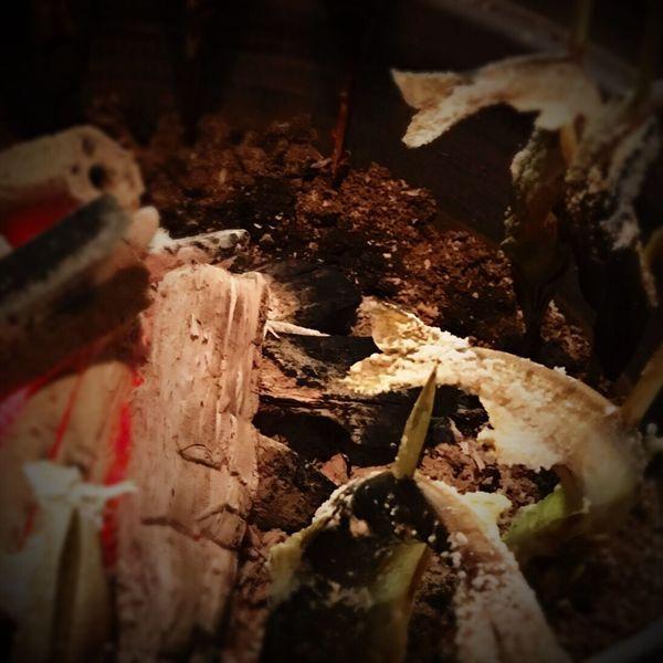 この前、実家で、焚き木で風呂を沸かし、囲炉裏で魚を焼いてました。 No Standard World Japanese Culture 囲炉裏