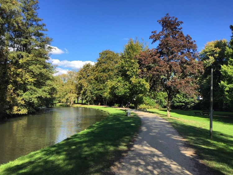 Walking in the park The Way Forward Sunlight Blue Sky Nature No People