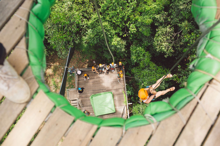 Plant Tree Green Color Nature Day High Angle View Real People Group Of People Growth Selective Focus Outdoors Wood - Material Leaf Forest Plant Part Men Sunlight Togetherness People Land