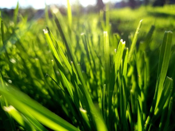 Trawa Water Frond Field Agriculture Close-up Grass Plant Green Color Plant Life