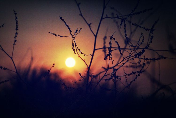 Sunset Silhouettes Silhouette Orange By Motorola The Five Senses Getting Inspired Nature_collection Sunset Sunlight Sunlights Nature My Best Photo 2015 Scenics Outdoors Golden Hour Atmosphere Tree Branches Beautiful Sunset Beautiful Nature