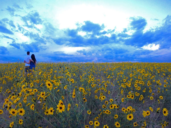 Beauty In Nature Clouds Colorado Colorado Photography Couple Couple In Nature Field Field Of Flowers Flower Horizon Over Land Husband And Wife Landscape Love Love In Nature Marriage  Nature Outdoors Pair Sky Sunflowers Sunset Wide Angle Wild Flower Photography Wildflowers Woman And Man Finding New Frontiers Perspectives On Nature This Is Family