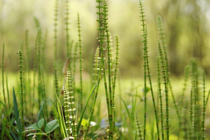 RePicture Travel Prehistoric Forest Green Grass Equisetum Summer Sommergefühle