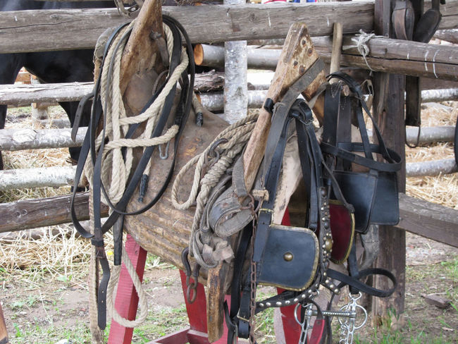 Worn leather horse bridles and bits hanging on wooden fence Bit  Bridle Buckle Country Equestrian Equine Equipment Halter Hanging Harness Horse Horseback Riding Leather Martingale Reins Riding Ring Saddle Set Stable Stirrups Strap Strapping Western Worn