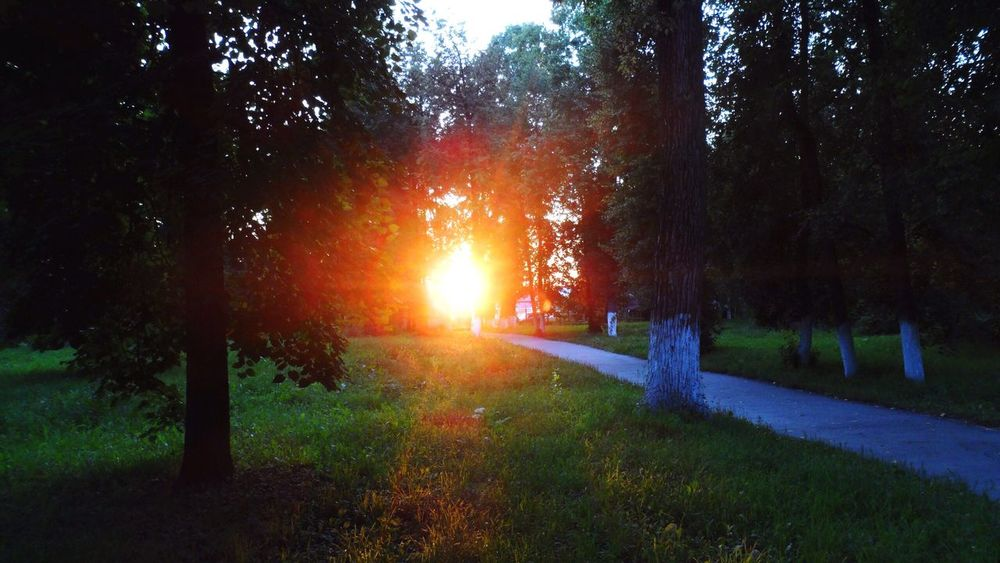 Nature Sun Sunset Sunny☀ Park