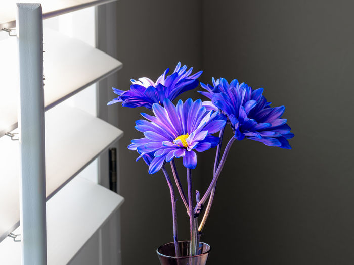 Close-up of purple flower in pot