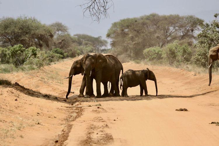 Elephant standing on sand against sky