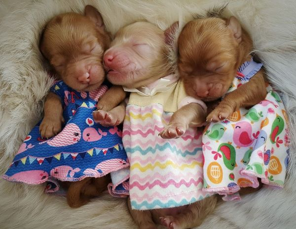 Sweet dreams! #puppy #animals #animal #pets #birds #wildlife #wild #cityscape #landscape #nature #sunset #lake #vacation #trip #city #downtown #reflectio #debbypalencia #love Crib Baby Clothing Babies Only Pet Bed