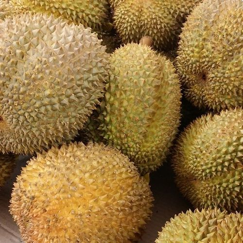 Ok fine, I'm getting up from bed to get some of these. Ilovedurian Giweats