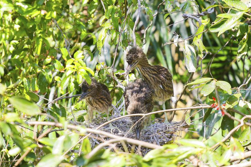 Birds In Nest On Tree