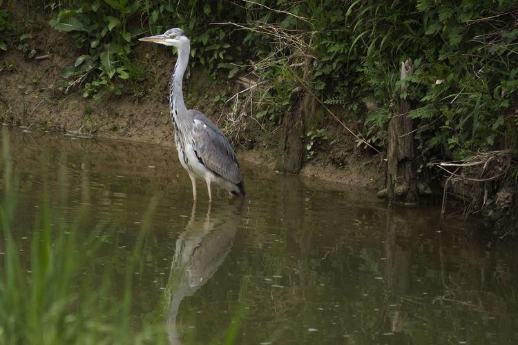 Heron Swamp