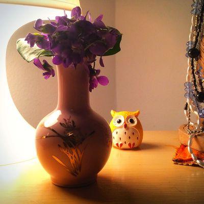 Violet Flowers Owl Details Decoration Spring Spring Flowers