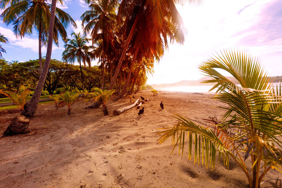 #Costa Rica #Nature  #beautiful #costarica #horse #ivamorgan #ocean #photography #sky #sunset #sunset #sun #clouds #skylovers #sky #nature #beautifulinnature #naturalbeauty #photography #landscape #sunset #sun #clouds #skylovers #skyporn #sky #beautiful #sunset #clouds And Sky #beach #sun _collection #sunst And Clouds #travel #traveller #travelling #travelphotography @iva Morgan @ivamorgan